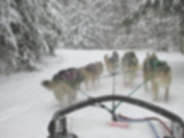 Sled dog team in snow