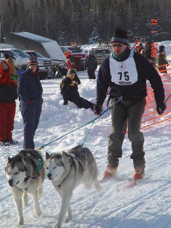 Skijoring Siberians