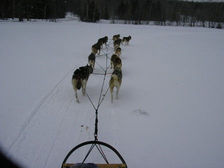 Ten dog sled team