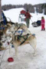 Dogsledding at Stowe Mountain Resort