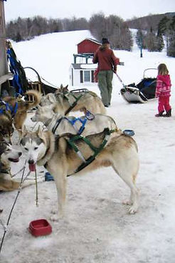 Dogsledding at Stowe Mountain Resort