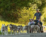 Vermont dog cart tour