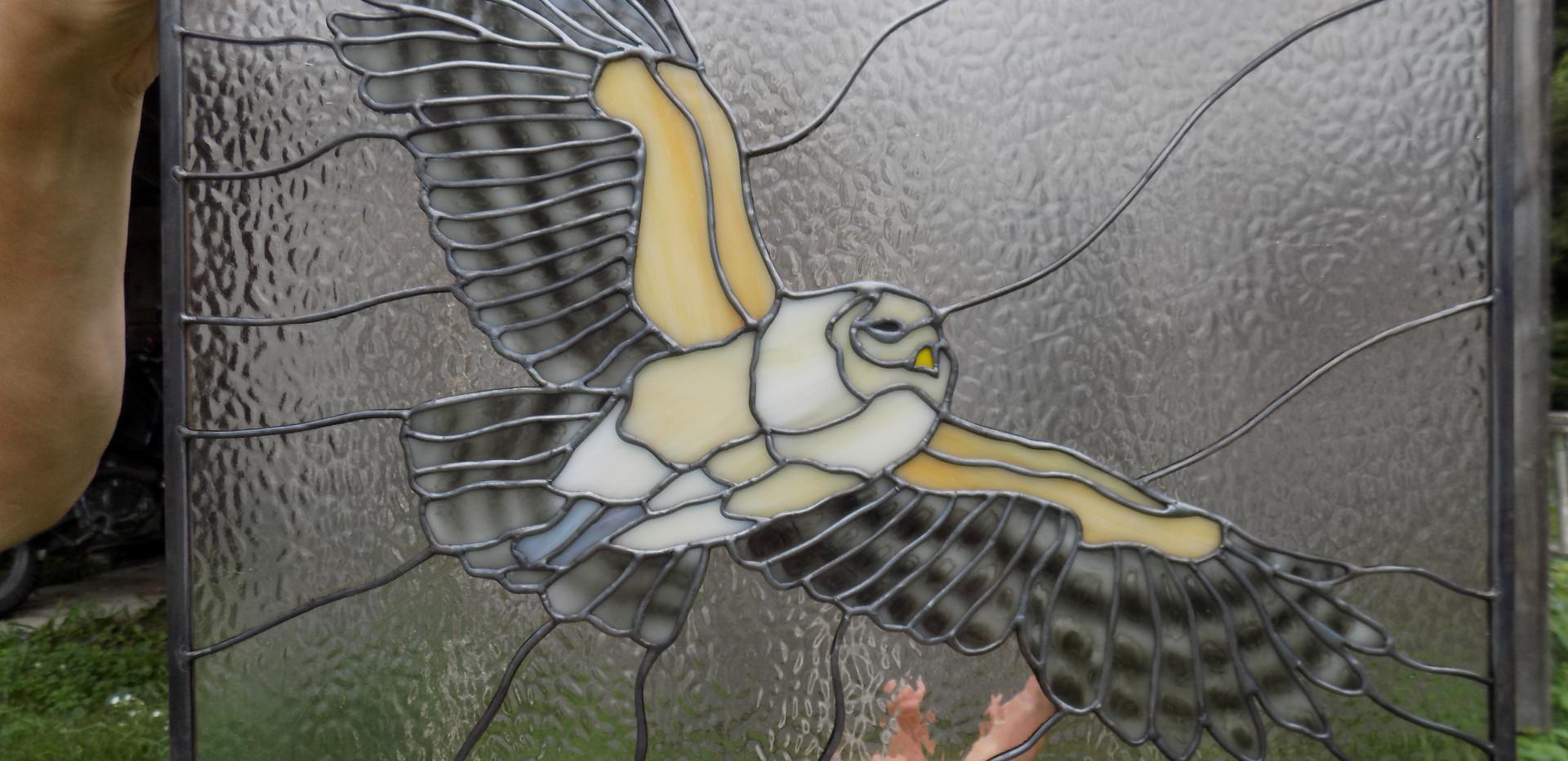barred owl 2.JPG