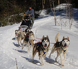 Vermont dogsledding