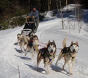 Vermont dogsledding