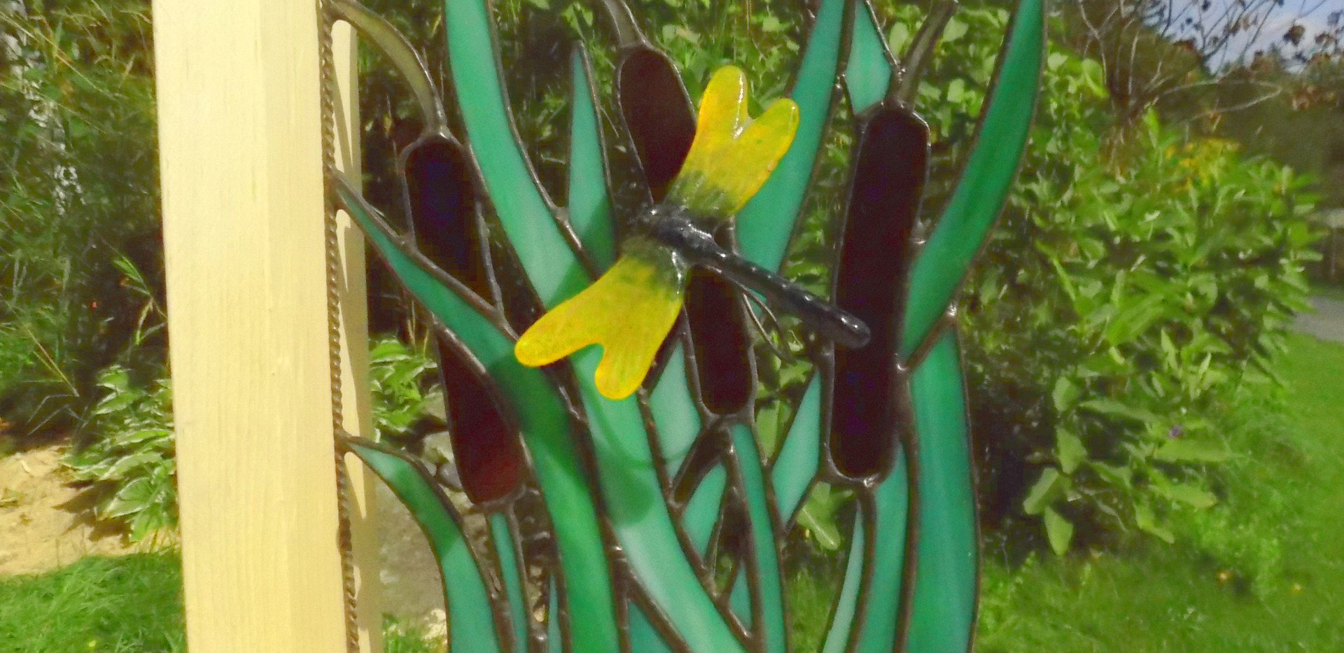 cat tails and dragonfly.JPG