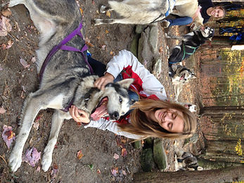 Petting Siberian Huskies
