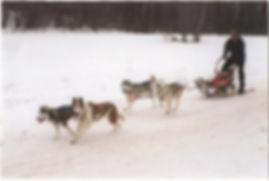Four dog sled team