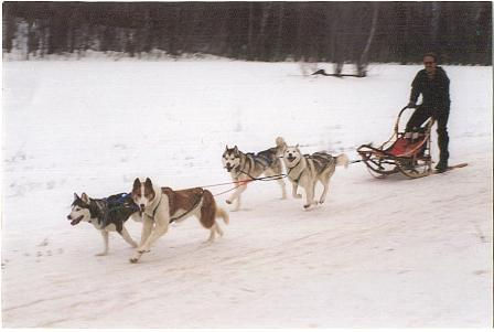 Four dog sled team
