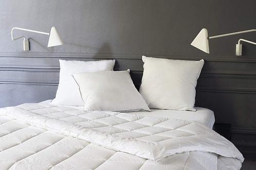 Comfort + Square Pillows
