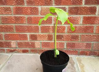 More on Tony's plant