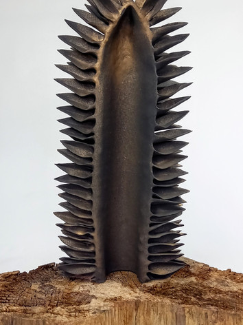 'Seedpod' Stoneware 2021