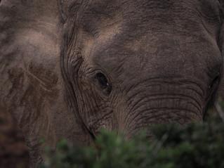 L'Addo Elephant National Park