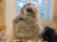 oliver owl.jpg