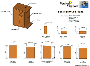 Squirrel-House_1.png