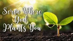 Serve Where God Plants You (Matthew 28:19)