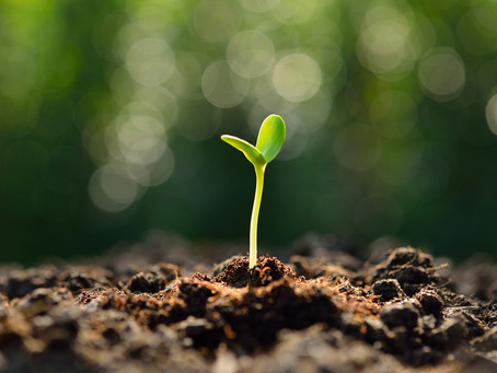 Be a Workplace Missionary: Serve Where God Plants You