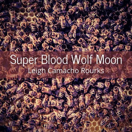 Super Blood Wolf Moon, Leigh Camacho Rourks