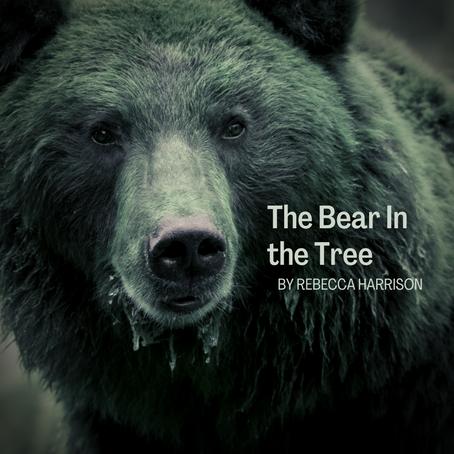 The Bear in the Tree, Rebecca Harrison