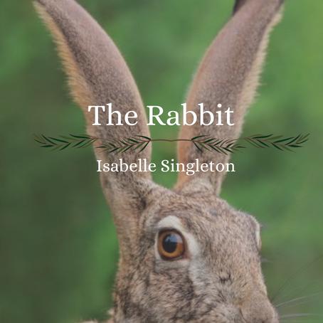 The Rabbit, Isabelle Singleton