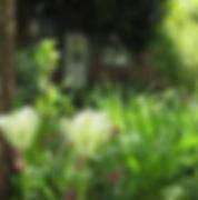 Adasflowers.jpg