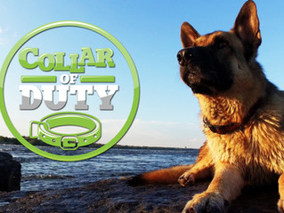 COLLAR OF DUTY: Our New, Original 12 part Series Premieres January 6th, 2017 at 10PM on ANIMAL PLANE