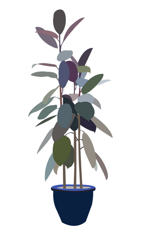 rubber%20tree%20png_edited.png