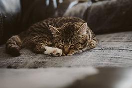 cat-kitten-kitty-animal-85126-1.jpeg