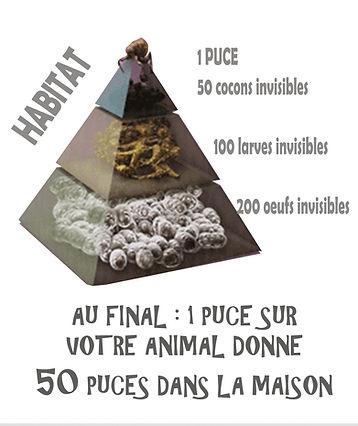 PUCES Pyramide.jpg