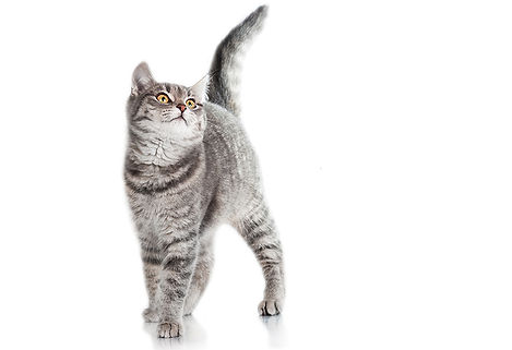 Cats_White_background_486825.jpg