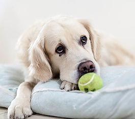 diabete-chien-consultation-veterinaire.j
