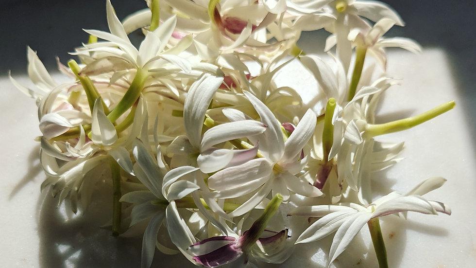 Petal Nectar Solid Perfume