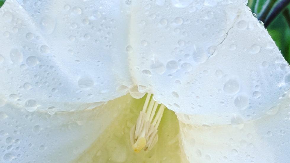 The Scentkeeper~Custom Bespoke Perfume