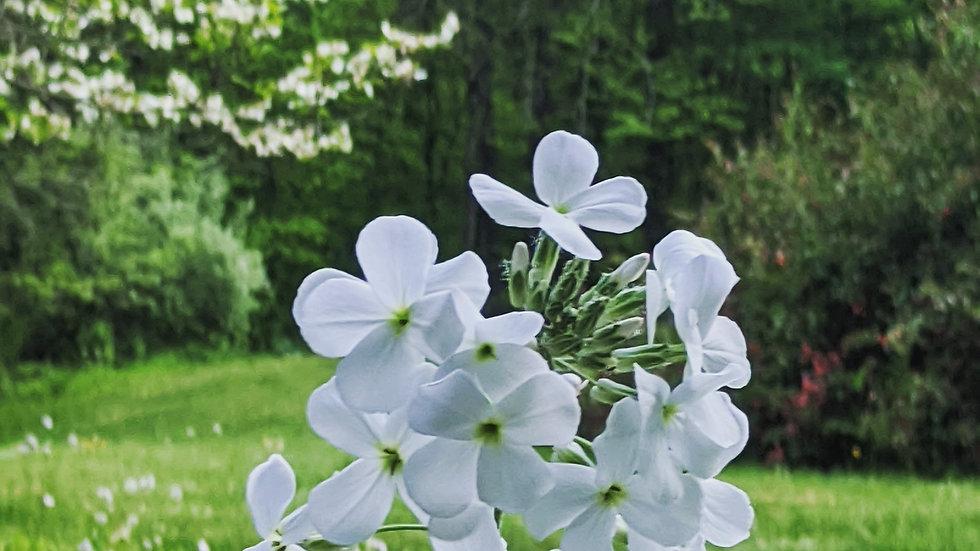 Faya Perfume