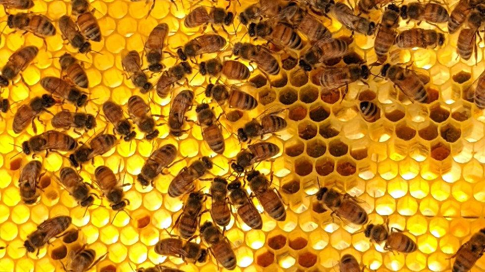 Perfumed Honey