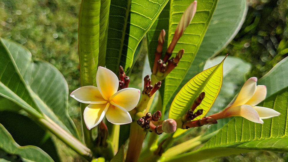 Half-Baked Flowers Solid Perfume