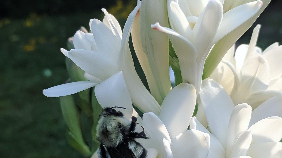 Bee and Bloom Perfume