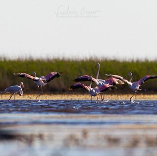 Flamingo-188.jpg
