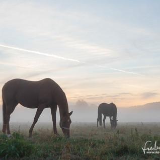 Pferde-1221.jpg