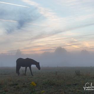 Pferde-1210.jpg
