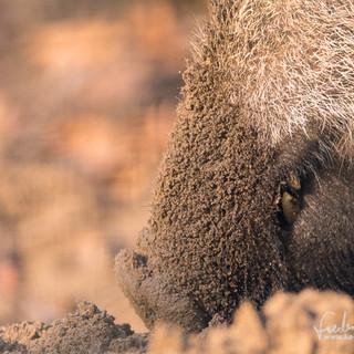 Wildschwein-4559.jpg