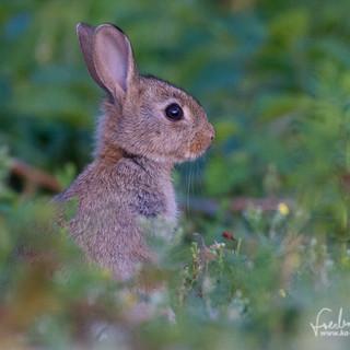 Kaninchen-3374.jpg