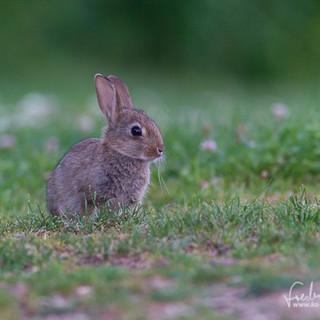 Kaninchen-3409.jpg