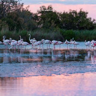 Flamingo-1139-2.jpg