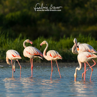 Flamingo-2019-2.jpg
