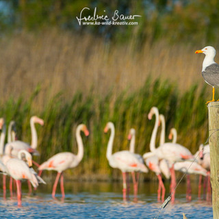 Flamingo-1945-2.jpg