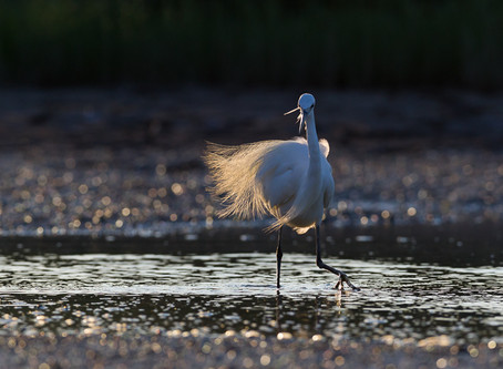 In der Camargue