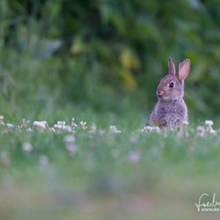 Kaninchen-3450.jpg