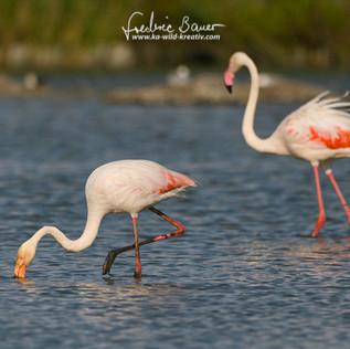 Flamingo-1351.jpg