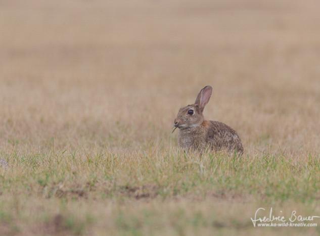 Kaninchen-9910.jpg
